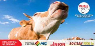 reduccion gases bovinos
